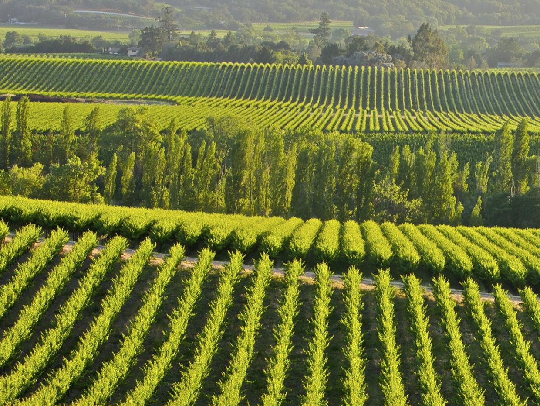 The Nexus Linking IBM, California Wine, and Climate Modeling - MzAzMDk4Ng